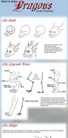 Basic Dragon Tutorial by suzidragonlady
