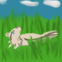 Linoone for 649 challenge by Gobityn