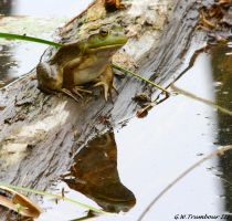 Froggy on a cloudy day by natureguy
