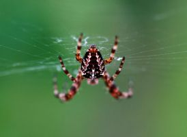 Spider by PaalM