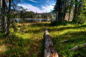 Deadfall by uncleclick