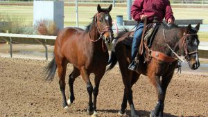 Racehorse Stock 30 by Rejects-Stock