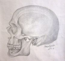 Skull Study by Egwine