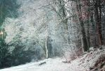 Winter Forest by Schnitzelyne