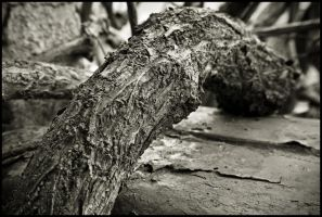 root by keithpellig