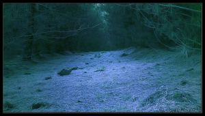 Into The Woods by CapturingTheNight