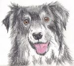 A Border Collie by Riok
