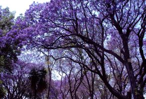 Purple Park by Talty
