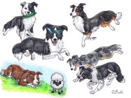 Border Collies by Bafa