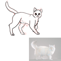 Cat anatomy practise by Growlithe9341