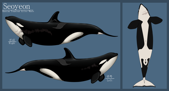 U-15 Seoyeon Russian Transient Matriarch by Ocean-Storm-Orca