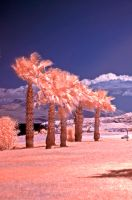 D300 infrared shot by agelisgeo