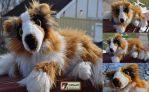 LaPorte Collie by Colliwolf