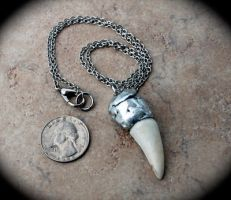 Soldered Mountain Lion Fang Pendant by kittykat01