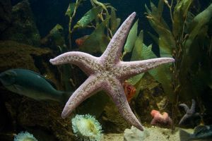 Starfish by almudena-stock