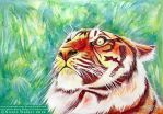 Tiger Stripes by Nicole-Marie-Walker