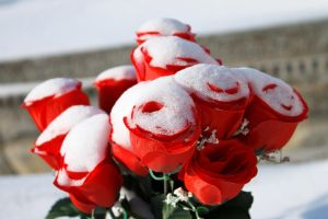 Red snowy roses by sztewe