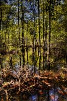 Gold Swamp by badchess
