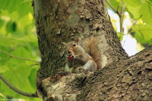 Squirrel in Central Park by MangaPip