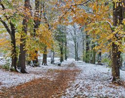 Between fall and winter by starykocur