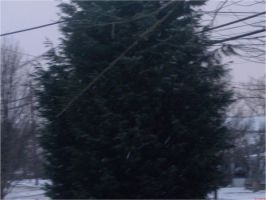 Snowy Pinetree by EtherealGothica