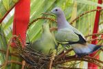Building a Nest of Love by garion