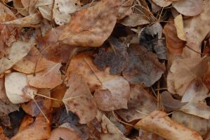 Stock 501 - Leaves by pink-stock
