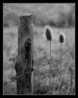 The Fence by mymamiya