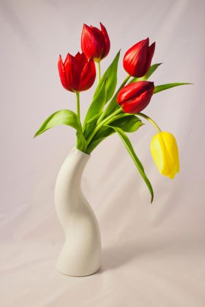 Tulpe 03 by NellyGrace3103