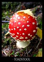 Toadstool by Keiton