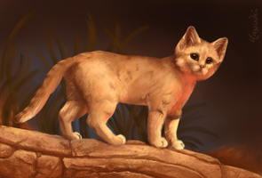 Sand Cat Study by StuffedPolarFox