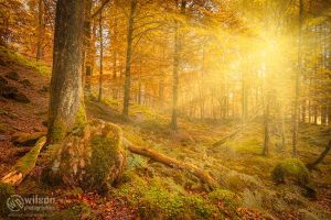 Lake District - Woodland Sun, Skelwith Bridge by wilsonphotographics