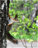 The Squirrel by Amrahelle