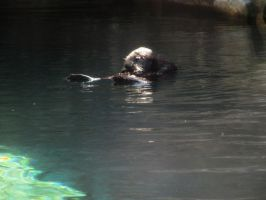 Sea Otter 4 -- Sept 2009 by pricecw-stock