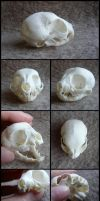 Kitten Skull by CabinetCuriosities