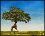 Seeing the forest for the tree by psivamp