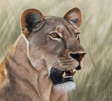 Lioness. Oil on panel by painterman33