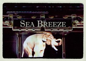 Sea Breeze card by Asaph