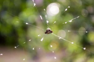 Spider in the open by Swaptrick