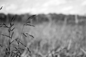 Field by KatieLindPhotography