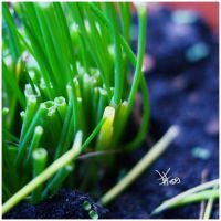 So green by accessoire