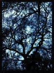 Trees by Avello