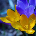 colors of spring I by Wilithin
