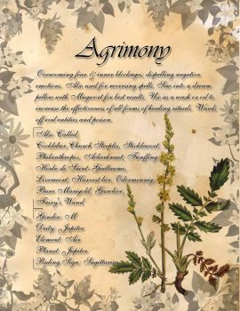 Book of Shadows: Herb Grimoire - Agrimony by CoNiGMa