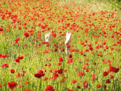 Gentils coquelicots, mesdames. by djoule