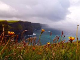 The Cliffs of Moher by Ilovedragons1