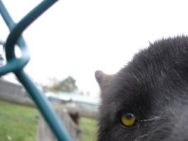 Nosey Wolf by HeWhoWalksWithTigers