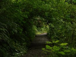 Tree Tunnel by Miffliness-Stock