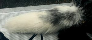 SOLD! Amazing Marble Fox Tail! by InNaturesImage