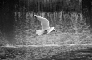seagull by rorshach13